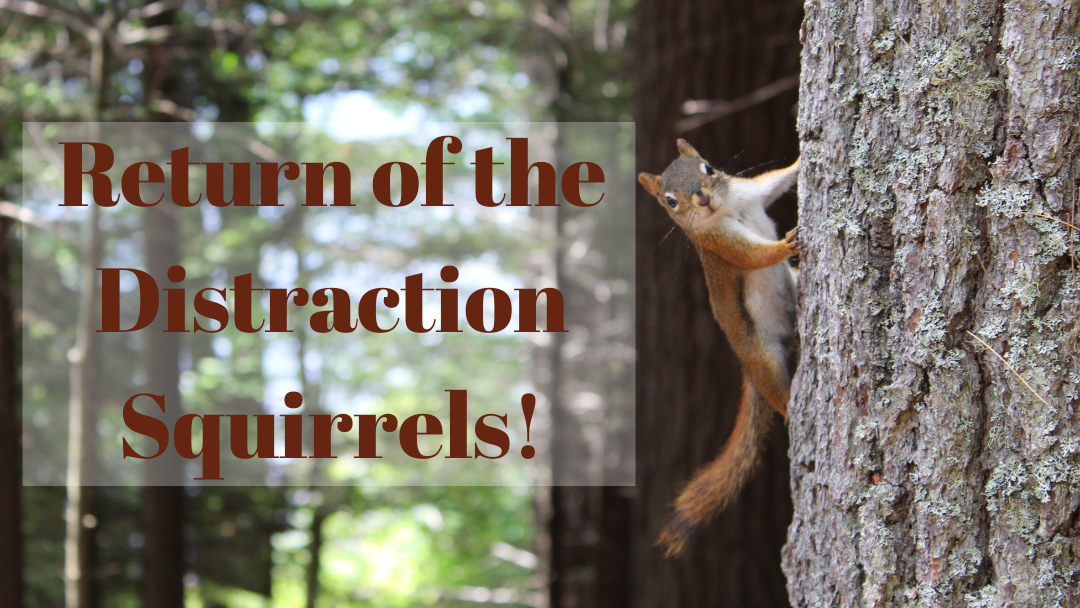 Return of the Distraction Squirrels!