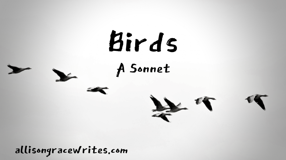 Birds a sonnet by Allison Grace